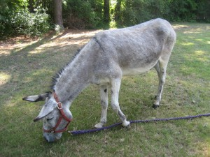 How a Donkey Can Help Your Child Remember God - Parenting Like Hannah